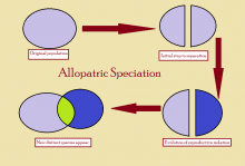allopatric-speciation-diagram